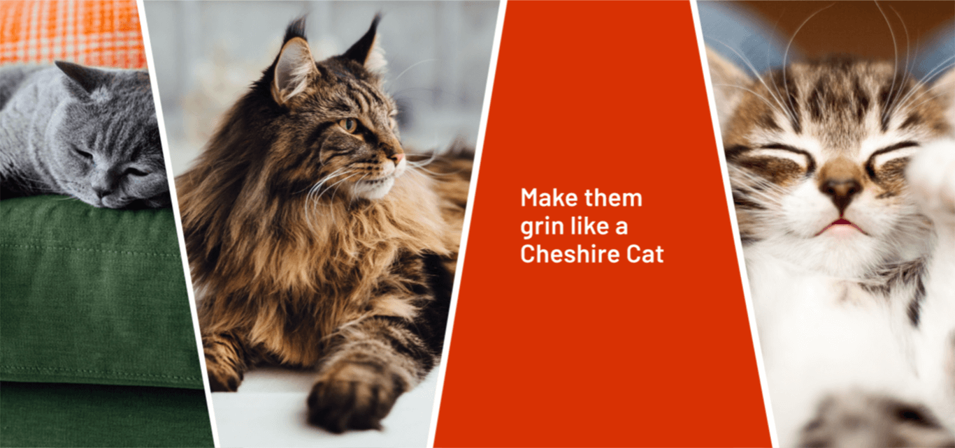 Collage image that includes a grey cat laying on a green sofa, a brown long-haired cat relaxing and a young brown and white kitten along with the quote 'make your cat grin like a Cheshire cat'