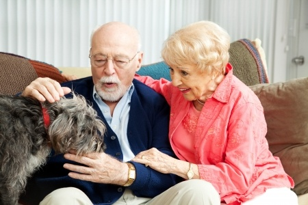 pet choices for the elderly