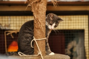cat with scratching pole