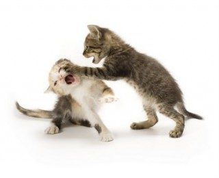 10 Tips to Stop Your Cat Fighting - two small kittens fighting