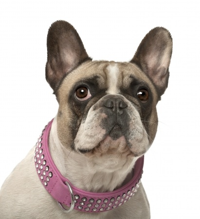 The Legal Requirements of a Dog Collar | Argos Pet Insurance