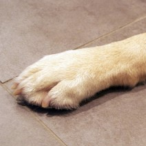 Care For Your Dog's Nails - White dog paw