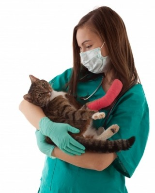 nurse and cat