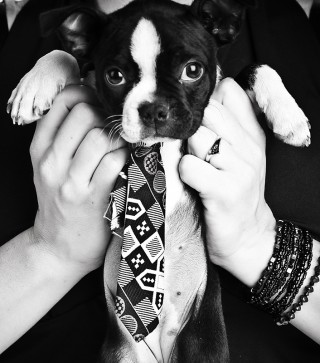See The World's Most Pampered Pets - pampered puppy with a tie