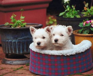 Top 10 Christmas Gifts for Pets - Puppies in a dog bed