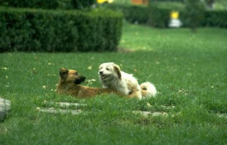 An Introduction to Rehoming a Dog - Dogs Play In The Grass