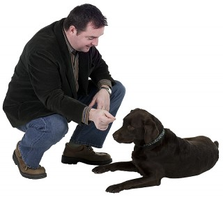 Labrador and man