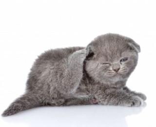 pet related topics - scratching kitten