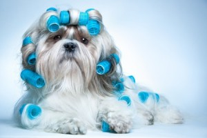 Dog articles - Dog grooming