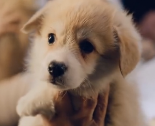puppy in pet video