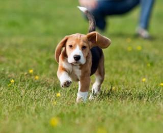 Puppy exercising