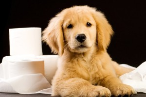 Dog articles - Toilet Training Puppy