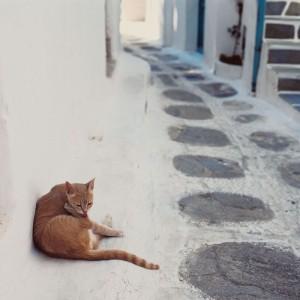 ginger cat 1