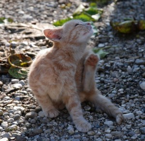 A kitten outside in summer