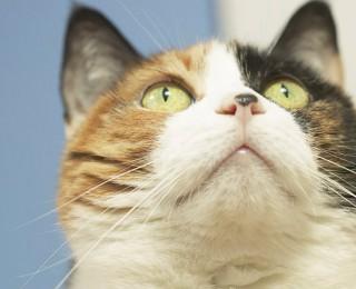 Cat behaviour - tortoise shell cat