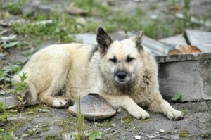 Tips For Searching For Your Lost Pet - A stray dog