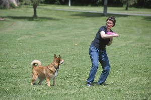 Hobbies you and your dog can enjoy - a dog plays fetch