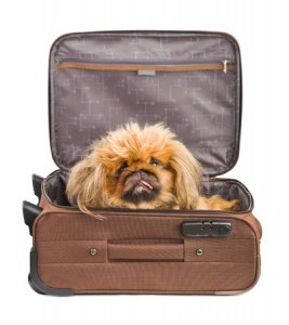 Dog in a suitcase