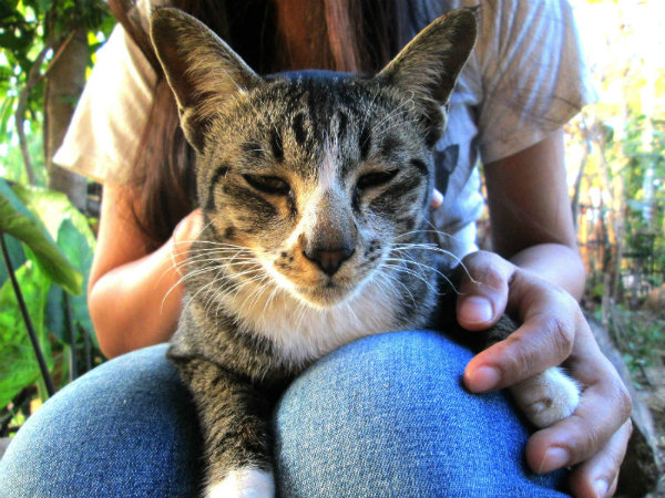 Different Types Of Cat Skin Conditions - Argos Pet Insurance