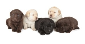 A litter of puppies