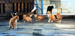 Cat Population - Group of Cats