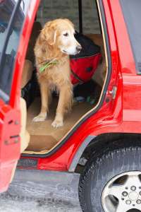 Hobbies you and your dog can enjoy - a dog in a car