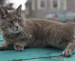 Kitten Care | We Talk Kitten Care | Argos Pet Insurance