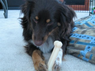 A dog with a bone