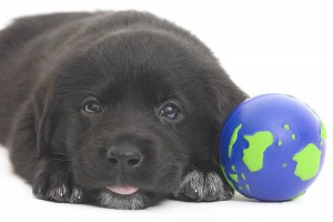 Pet Toys and Safety