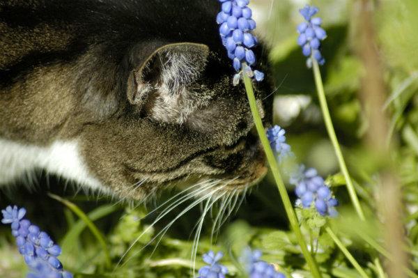 cat senses (2)