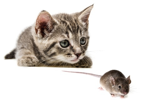A cat eyes up a mouse