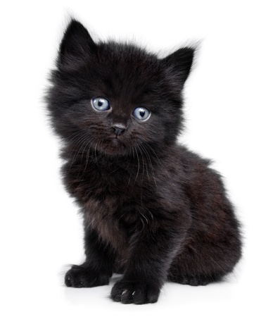 What Is A Good Name For A Black Male Cat