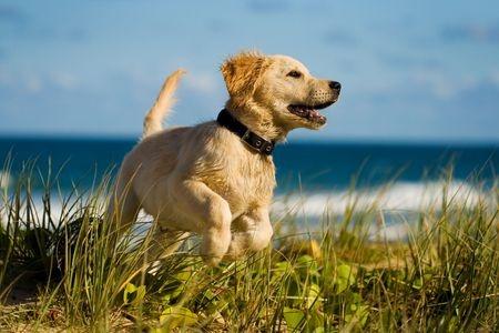 A dog enjoys a day at the beach