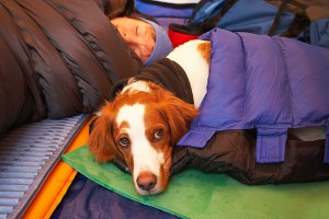 Dog in sleeping bag