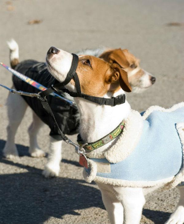 dog-muzzles