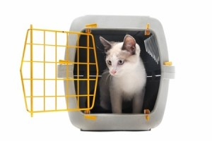 A cat in a cage