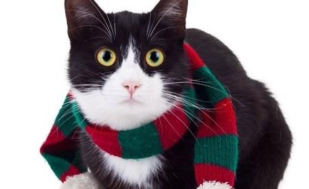 A Christmas cat
