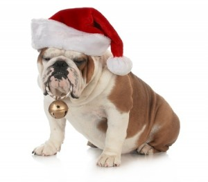 A dog in a Christmas hat