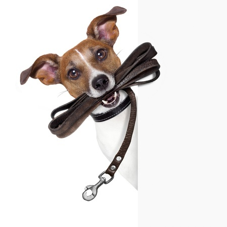 Dog with a lead