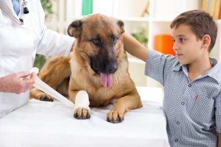 Injured Dog at vets