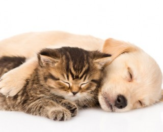 Behind The Scenes Of Our TV Advert - Puppy and Kitten Cuddle Together