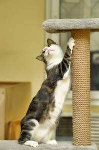 A cat with a scratching post