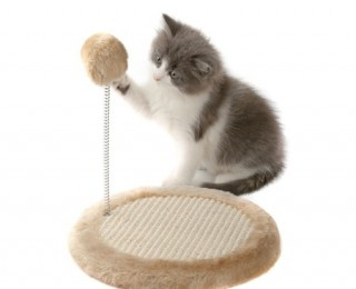 Kittens and Scratching Post