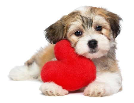Love your pet day puppy