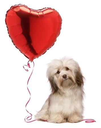 Happen Valentines Day Dog