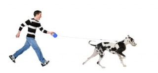 A dog pulls on its lead on a walk
