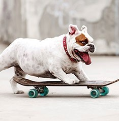 Talented pet dog rides a skateboard