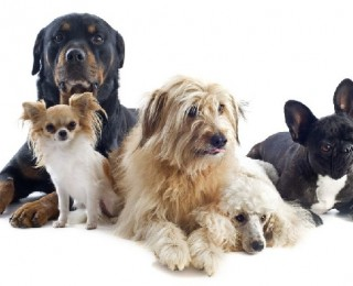 Group of dogs sat together