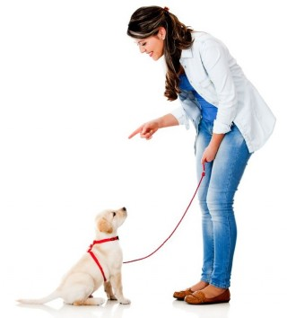 Woman training a dog