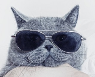 A cat wears sunglasses on holiday